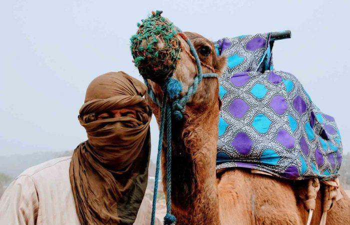 fes camel tours